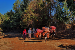 사람_당나귀-장터가는길, 아셀라_에티오피아,  61 x 91