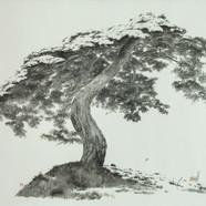 006, 우산같은 나무, 170 x 267 cm, 종이에 수묵, 2019