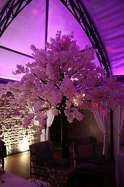 Cherry blossom tree hire Cae Town