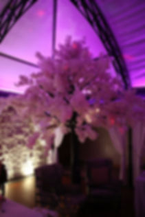 Cherry blossom trees hire Cape Town