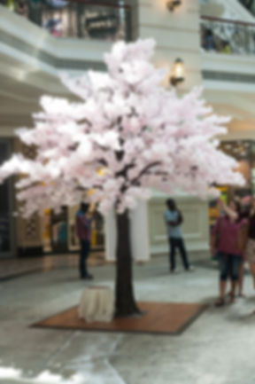 Pink Cherry Blossom tree hire Cape Town