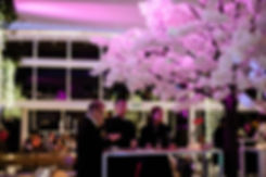Cherry blossom tree hire for weddings and events Cape Town