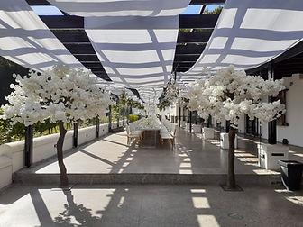 Cherry blossom tree Molenvliet wedding