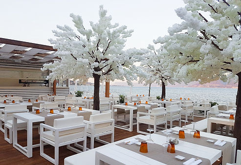 Cherry blossom trees weddings Cape Town