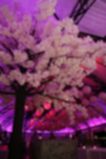 Cherry blossom trees weddings Cape Town