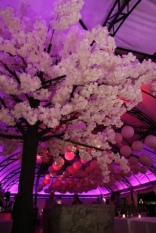 Pink Cherry blossom tree Forest 44