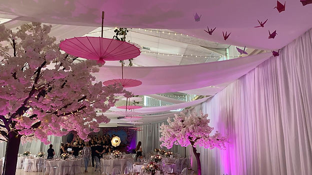 Cherry Blossom Tree Hire for events in Cape Town