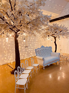 White Cherry Blossom Trees to rent Cape Town