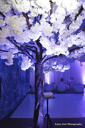 Cherry Blossom Trees to rent Cape Town