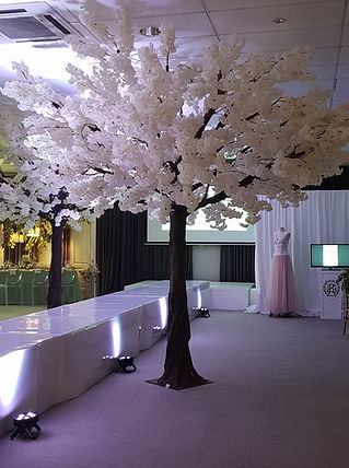tree hire for events Cape Town