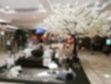 White Cherry Blossom Tree Cape Town