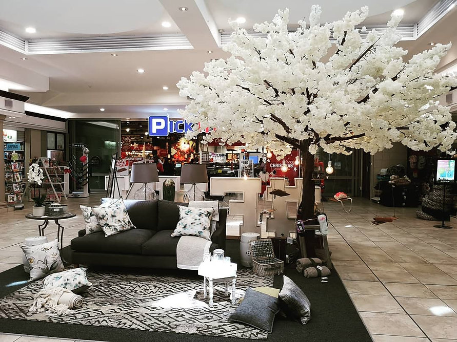 White Cherry Blossom Tree Cape Town