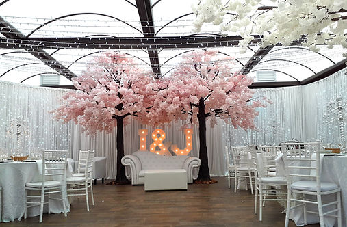 Pink Cherry blossom trees to hire Cape Town