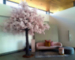 Cherry blossom hire in Cape Town for weddings
