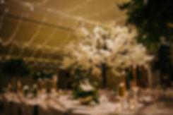 Kirstenbosch gardens weddings