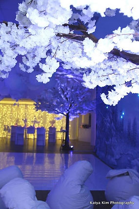 White Cherry Blossom Trees hire Cape Town