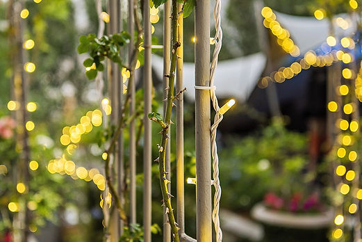 Fairy lights to hire Cape Town