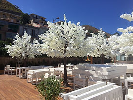 Cherry blossom trees Cape Town
