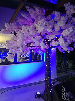 Pink Cherry Blossom Tree to hire Cape Town