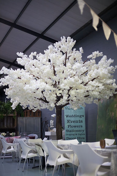 Cherry blossom tree hire Cape Town