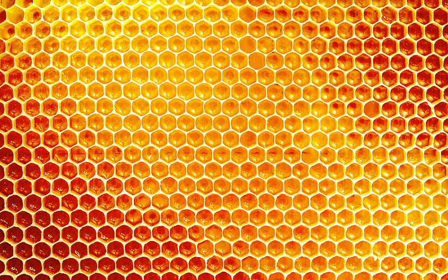 Honey comb background.jpg