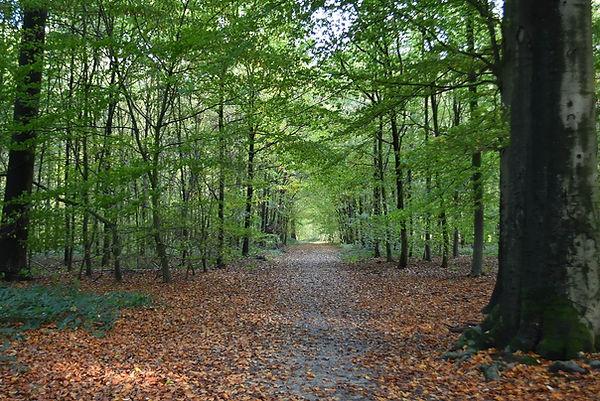 buggenhout-bos-in-de.jpg