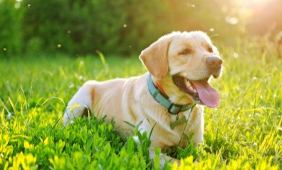 Tips for choosing the best walker for your dog in Rye