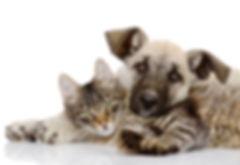 the dog and cat lie together. isolated o