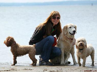 Dog beach Rye