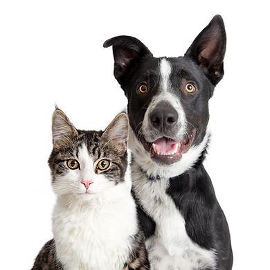 XL dog cat.jpg