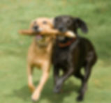 Dog Walker Mamaroneck