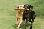Dogs-Running.jpg