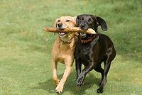 Dog Trainer Rye