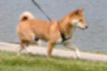 Dog Walking Harrison, Rye, Mamaroneck