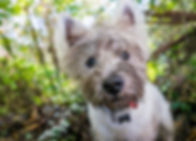 Dog Hiking Rye