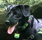 Dog walker Larchmont