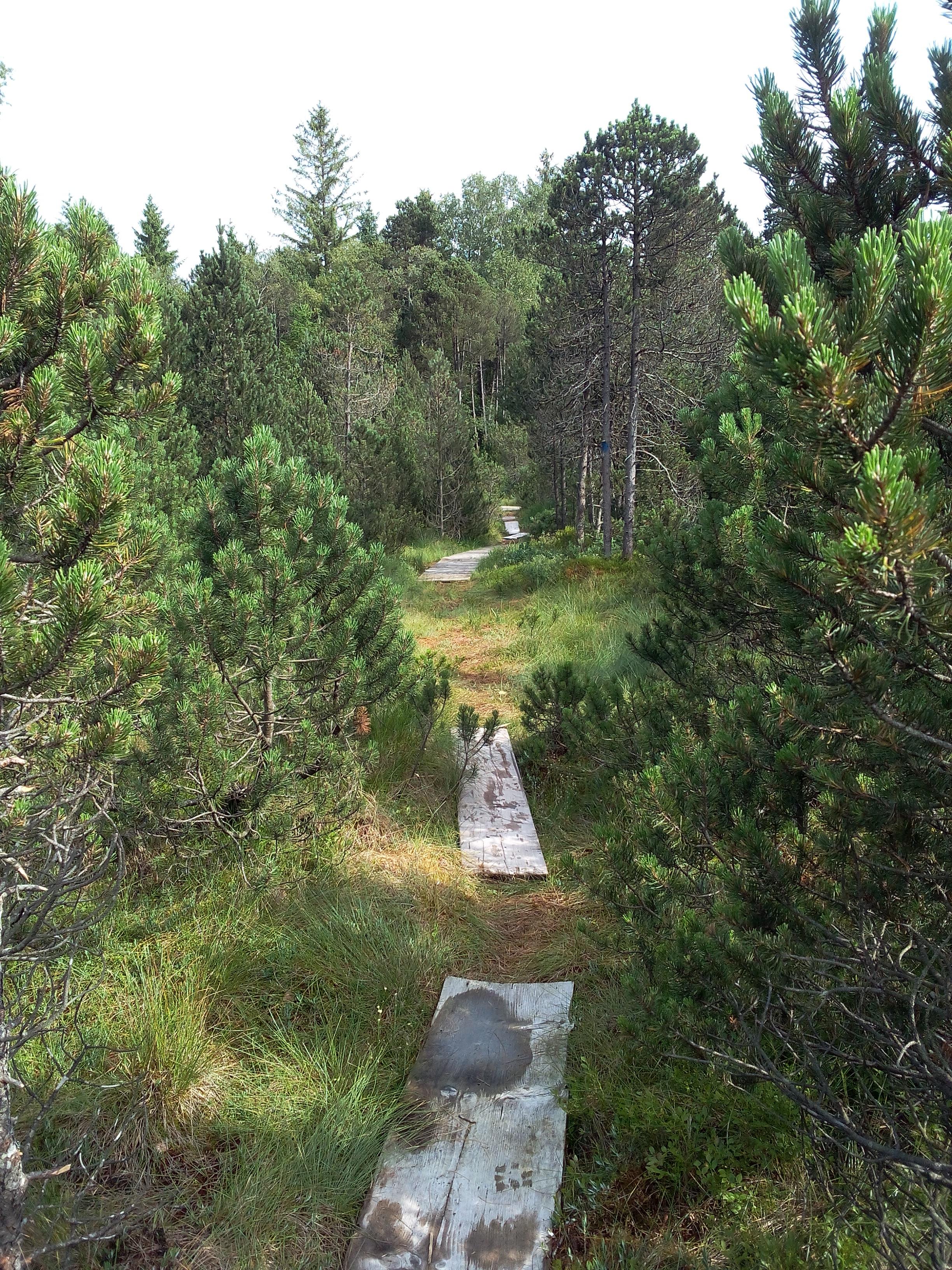 Bretterweg
