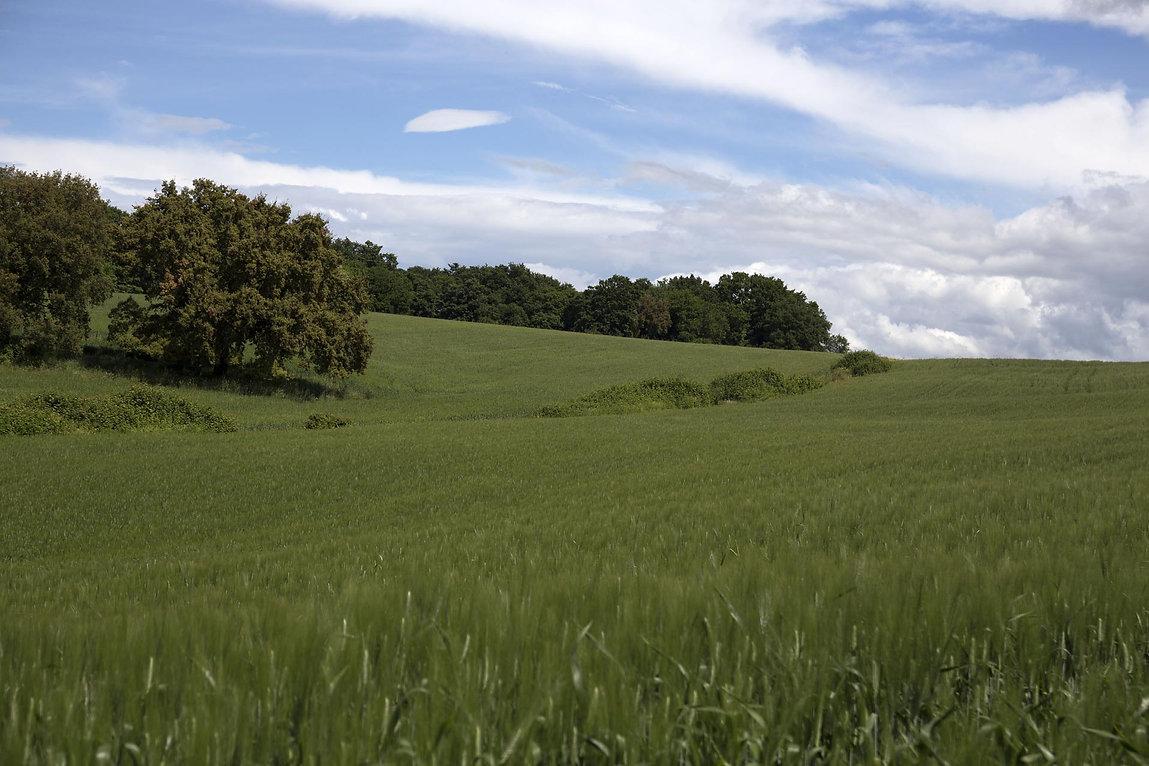 Natural fields