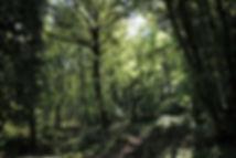 Forest of Torrecchia Vecchia