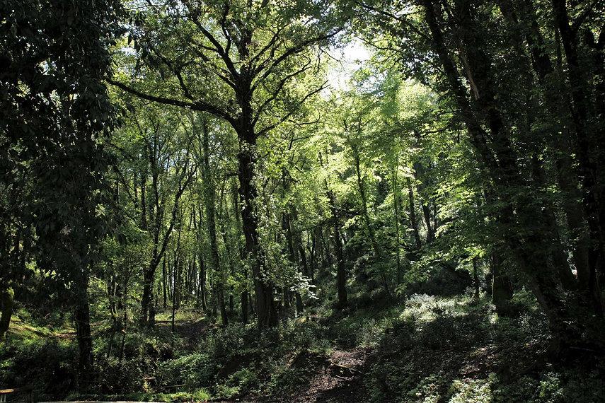 Foresta di torrecchia vecchia
