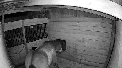 pony-cam.jpg