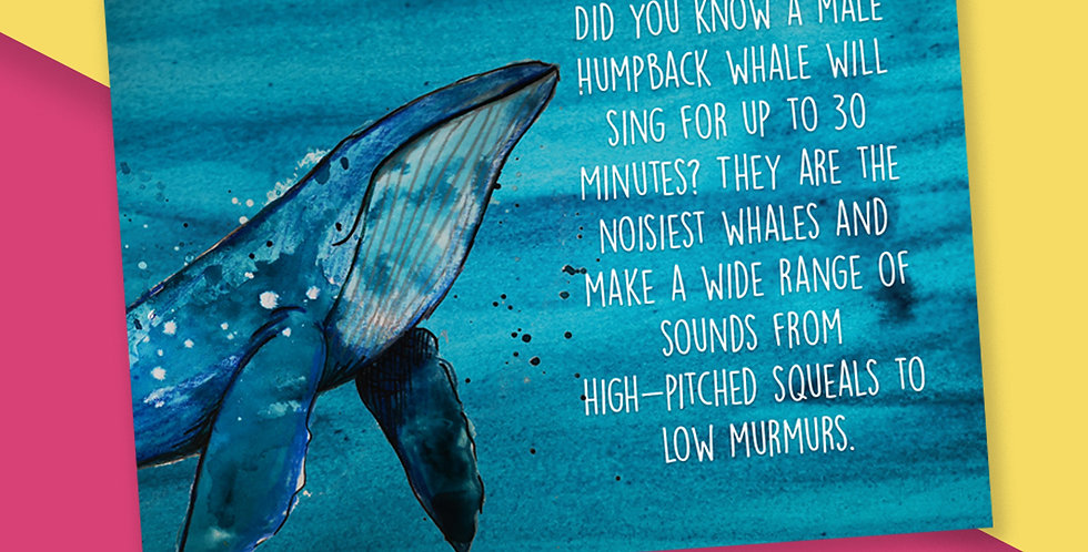 50x Humpback Whale Fact Postcards