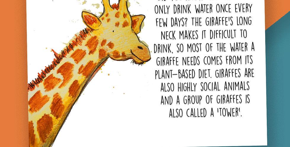 50x Giraffe Fact Postcards