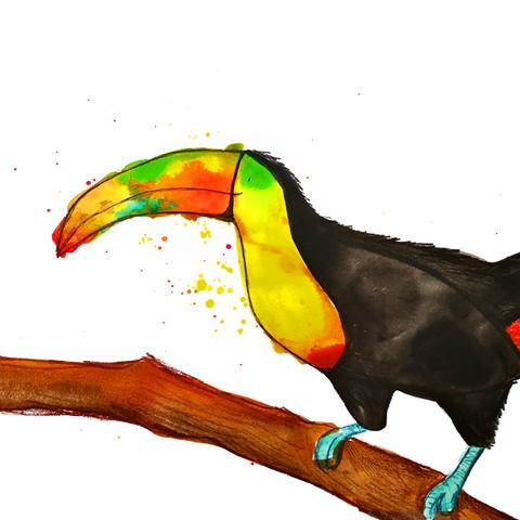 toucan.jpg