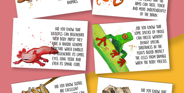 6 x Animal Facts Postcard Pack