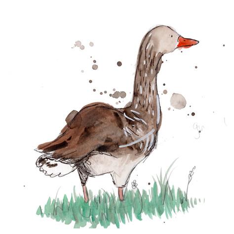 Grey Leg goose.jpg
