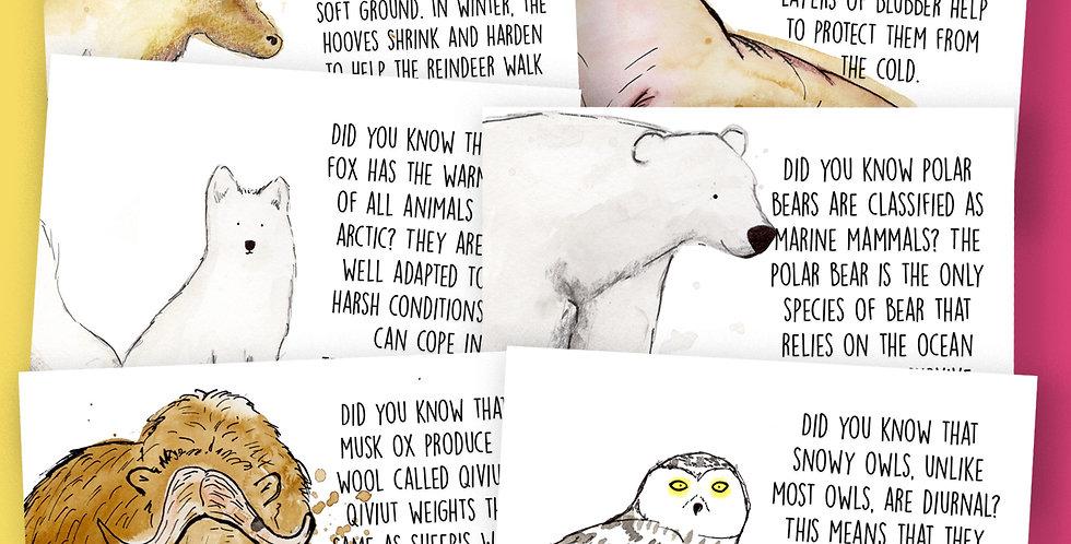 6 x Arctic Animals  Facts Postcard Pack