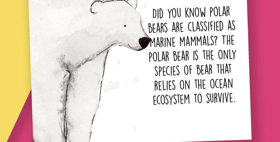 50x Polar Bear Fact Postcards