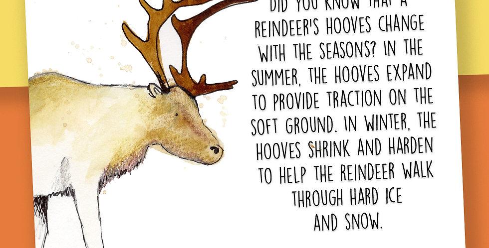 50x Reindeer Fact Postcards