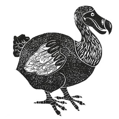 dodoblack web.jpg